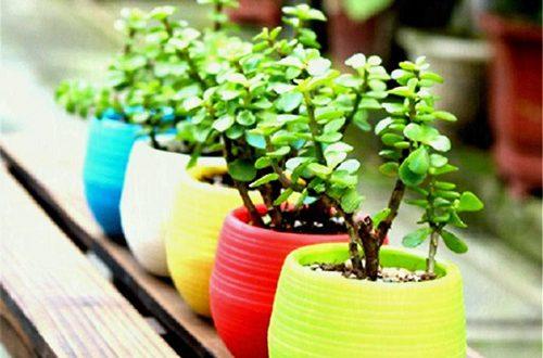 گلدان پلاستیکی کوچک رنگی