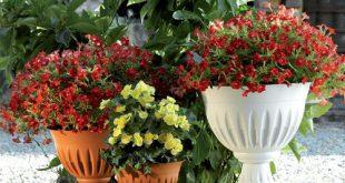 قیمت گلدان پلاستیکی طرحدار