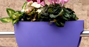 خرید اینترنتی گلدان پلاستیکی خورجینی