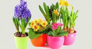 فروش گلدان پلاستیکی گلباران